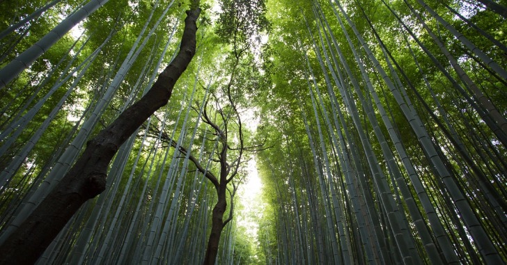 下から見た左右向かい合った竹林