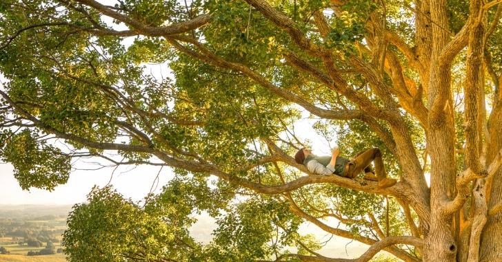 木の上で仰向けに寝そべる男性
